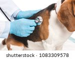 cropped image of veterinarian... | Shutterstock . vector #1083309578