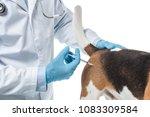 cropped image of veterinarian... | Shutterstock . vector #1083309584