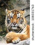 Stock photo tiger 108331763