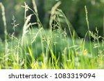 green grass nature background...   Shutterstock . vector #1083319094