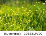 green grass in the summer...   Shutterstock . vector #1083319100