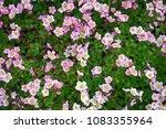pink small flowers | Shutterstock . vector #1083355964