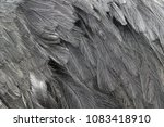 ostrich feathers close up | Shutterstock . vector #1083418910