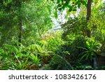 green subtropical forest plants ... | Shutterstock . vector #1083426176