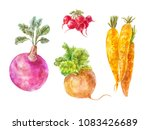 set of underground vegetables... | Shutterstock . vector #1083426689