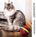 Small photo of gray cat sits nearby to a red ball and looks with contempt