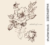 graphic sketch of a rose | Shutterstock . vector #1083468944