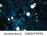 bush with wild roses | Shutterstock . vector #1083479993