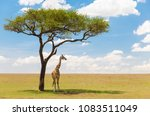 animals  nature and african... | Shutterstock . vector #1083511049