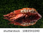 lobster dish in restaurant | Shutterstock . vector #1083541040