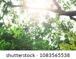 sunlight and fresh green... | Shutterstock . vector #1083565538