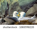 couple of kittiwakes gulls... | Shutterstock . vector #1083598220