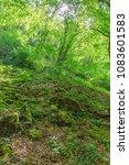 moss and dense vegetation in a...   Shutterstock . vector #1083601583