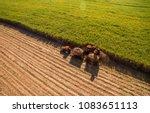 Sugar cane hasvest plantation...