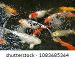 beautiful  fishs  swimming. | Shutterstock . vector #1083685364
