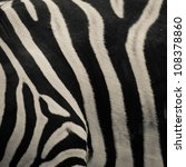 animal zebre black and white pattern texture - stock photo