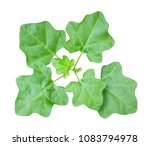 top view of the small plant... | Shutterstock . vector #1083794978