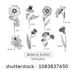 hand drawn wild hay flowers.... | Shutterstock .eps vector #1083837650