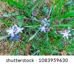 decorative flowering plant from ... | Shutterstock . vector #1083959630