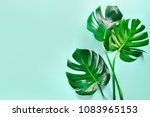 Monstera Leaves Summer Minimal...