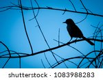 Silhouette Of A Bird ...