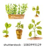 several pots with seedlings for ... | Shutterstock . vector #1083995129