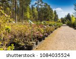 outdoor plant nursery with lot... | Shutterstock . vector #1084035524