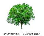 shrubs beautiful bush isolated  ... | Shutterstock . vector #1084051064