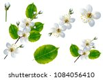 flowering branch of cherry... | Shutterstock . vector #1084056410