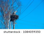 pair of storks sitting in nest. ... | Shutterstock . vector #1084059350
