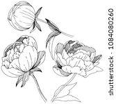 wildflower peonies flower in a... | Shutterstock .eps vector #1084080260