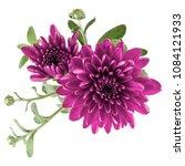 Lilac Chrysanthemum Flower...