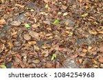 full fallen dry brown leaf flat ... | Shutterstock . vector #1084254968