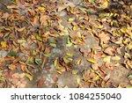 full fallen dry brown leaf flat ... | Shutterstock . vector #1084255040