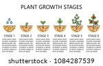 plant growth stages... | Shutterstock .eps vector #1084287539