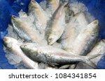 Small photo of A popular food fish in South Asia. Tenualosa ilisha (ilish, hilsa, hilsa herring/ hilsa shad). Bangladesh's national fish. Many people involved in fish export import, fishing business