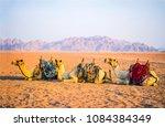 Small photo of Camel caravan rest on desert sand. Three camels in resting camel caravan scene