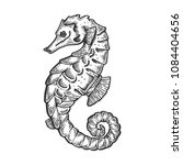 sea horse animal engraving... | Shutterstock . vector #1084404656