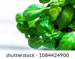 fresh basil on white marble... | Shutterstock . vector #1084424900