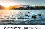 duck swimming on wakatipu lake... | Shutterstock . vector #1084437383