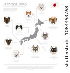 dogs by country of origin.... | Shutterstock .eps vector #1084493768