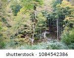 Stock photo autumn forest selva de irati fall beech jungle in navarra pyrenees of spain 1084542386