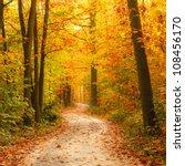 Pathway Through The Autumn...