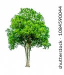 shrubs beautiful bush isolated  ... | Shutterstock . vector #1084590044