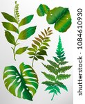 a set of green tropical exotic... | Shutterstock .eps vector #1084610930
