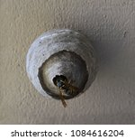 yellow jacket outside of nest | Shutterstock . vector #1084616204