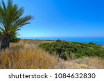 palm tree on uncultivated coast ... | Shutterstock . vector #1084632830