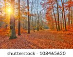 Colorful Sunset In Autumn Forest