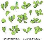 boxwood bush leaves   Shutterstock .eps vector #1084659239