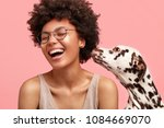 Stock photo happy overjoyed african american female feels glad as dalmatian dog smells her and shows devotion 1084669070